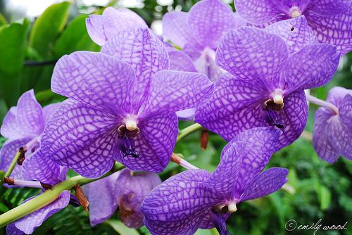Entretenir une orchidée, comment faire pour réussir ?Entretenir une ...