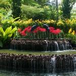 Jardin national des orchidées de Singapour