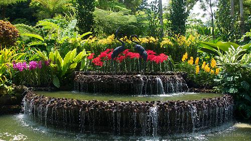 jardin national des orchidées de Singapour 2