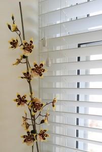 orchidée vacances