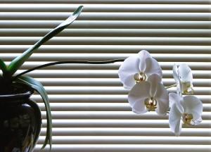 orchidée vacances 3