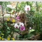 L'Orchid Garden de Puerto De La Cruz