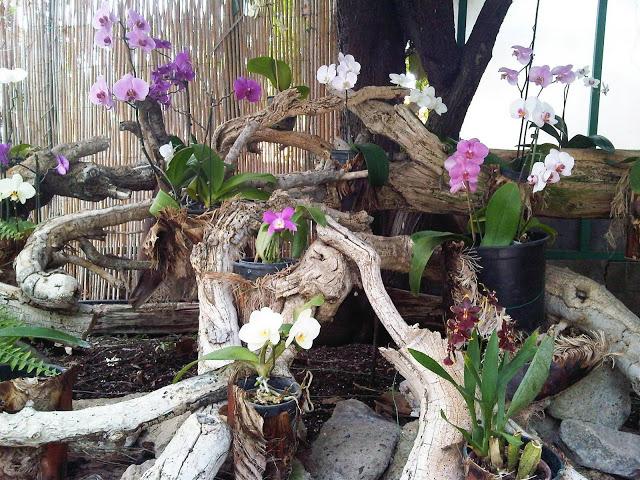 orchid garden puerto de la cruz 2