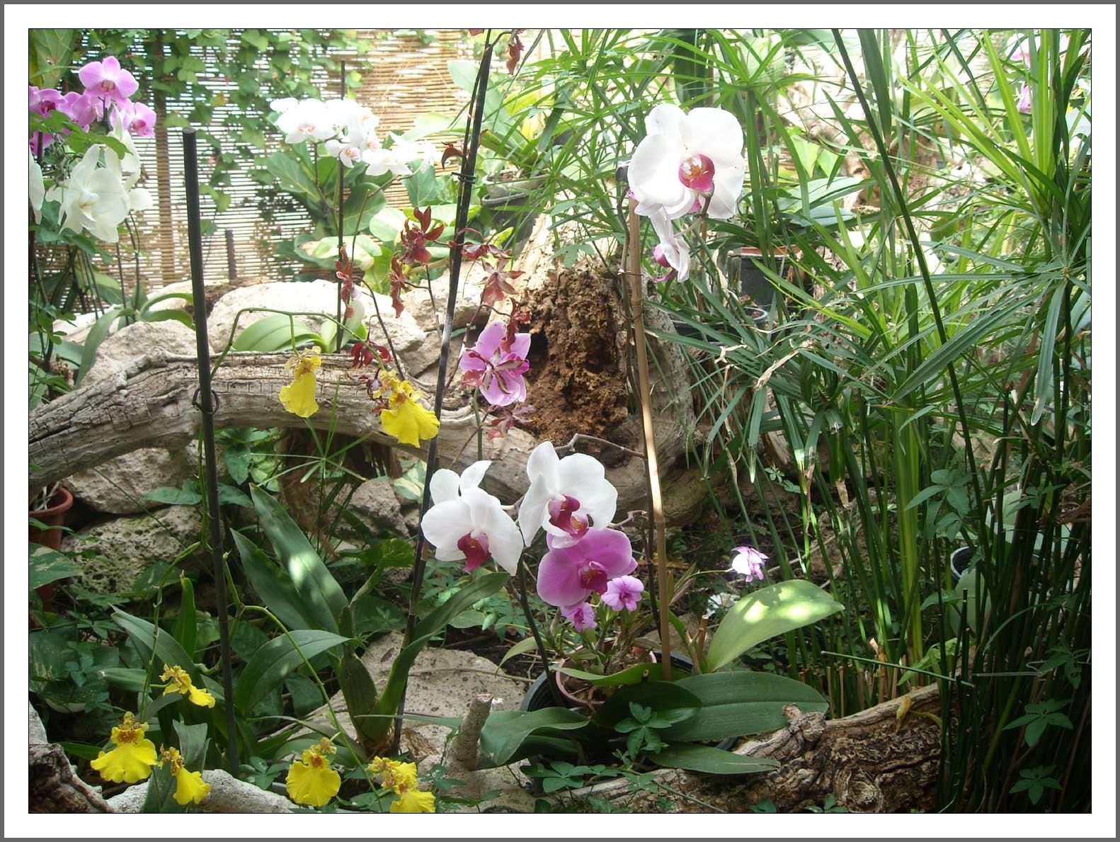 orchid garden puerto de la cruz