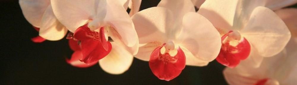 encyclop die des esp ces entretenir une orchid eentretenir une orchid e. Black Bedroom Furniture Sets. Home Design Ideas